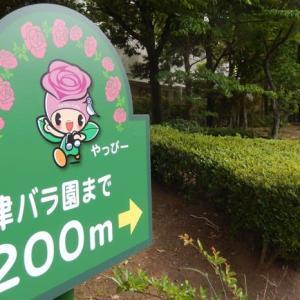 ☆ また、春のバラ園に行ってきました その1 ☆