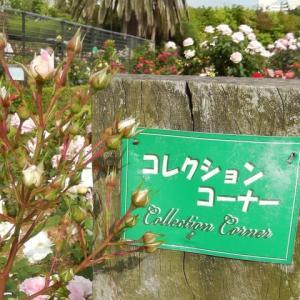 ☆ また、春の薔薇を見に その2 ☆