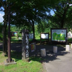 8月10日 妙高高原・いもり池 逆さ妙高山は見られなかったが、それ以上の睡蓮に感激
