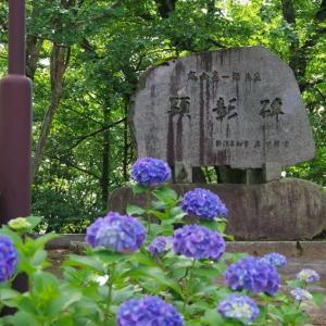 6月24日 見附市 観音山・水道山の紫陽花
