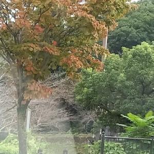 紅葉の始まり・・・