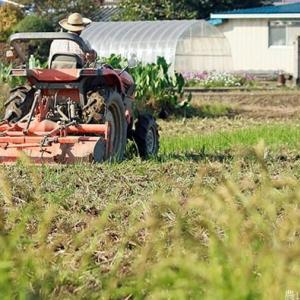 刻み稲わらの作土混ぜ込み