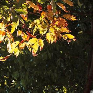 朝陽に映える秋