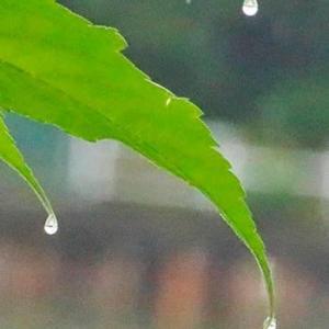 雨中の落滴
