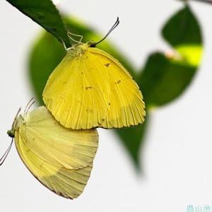 夏 命をつなぐ蝶
