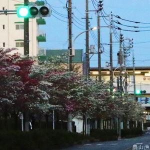 春暁の交通信号機