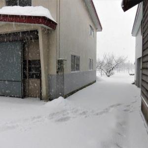 久しぶりにまとまった雪