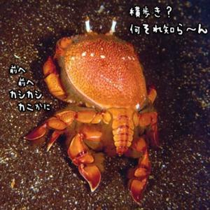 常識を破る蟹(カニ)