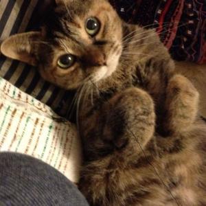 今、原資料、探索中に、かわいい猫の写真を見つけて、・・・この猫に、鎌倉春秋窯オーナーが固執したために、私が警察に追われることになって