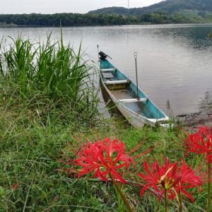 木曽川の季節の花と二匹の野良ちゃん
