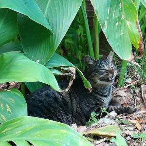 守口大根畑と猫