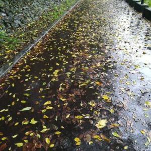 野良ちゃん達のいない大雨の木曽川