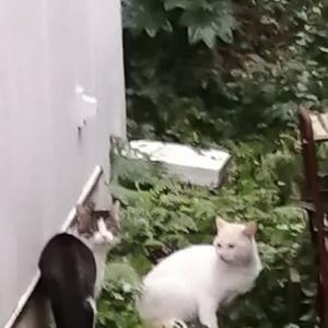 スリちゃん&ハクちゃん&???