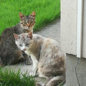 姉の緊急入院後の猫の親子は???