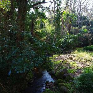 柿田川の湧水池と大瀬崎