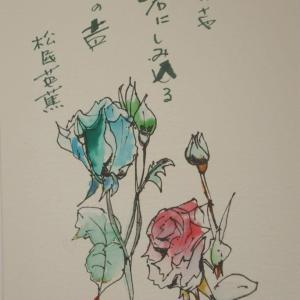 素人の写真とペン画≪202011≫
