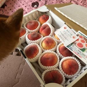 桃が届きました。
