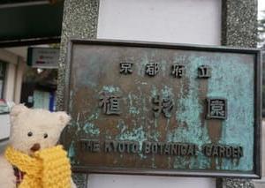 クリスマスの25日まで「京都府立植物園」のポインセチア展。100種700株が鮮やかに