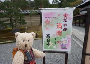 「高台寺」の雅なしだれ桜。静寂の中で楽しむ春の庭