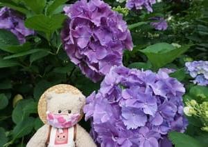 アジサイが見ごろを迎えた「京都府立植物園」。初夏の花もいろいろ…