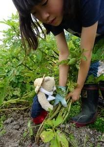 [キッズファーム㏌京都大原」の畑での収穫体験。自然の恵みと不思議さを実感する体験