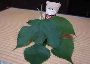 [風まつり」が始まった「千本ゑんま堂(引接寺)」。七夕にちなみ梶の葉に託すお願い事。