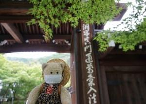 紅葉もいいけど、緑の世界も素敵です。青い楓と苔が美しい「永観堂禅林寺」。