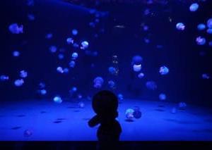 [京都水族館」。西日本最多の幻想的なクラゲの展示にうっとり。楽しいイルカショー…可愛いペンギンなど、