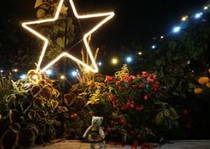 京都府立植物園で11月29日まで開催「世界の紅葉ライトアップ2020」。幻想的な景色が広がる夜の世界