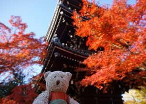 ミモロの紅葉散歩。楓が見ごろを迎えた「真如堂」。ミモロが赤く染まるほどの鮮やかさ