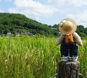久しぶりに訪れた京都盆地の北にある「深泥池」。まずは周囲のお散歩から…