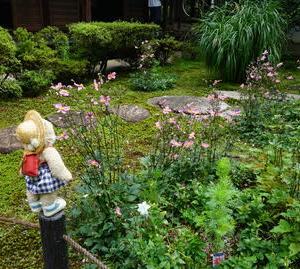 「泉涌寺」の塔頭「新善光寺」。四季の花々が植わる庭。毎月ことなる御朱印が人気