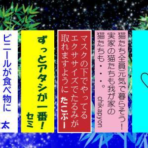星に願いを2021-5