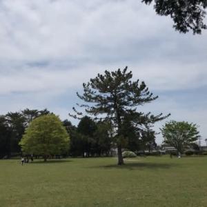 寝起き動画 #ひかぺ +散歩。