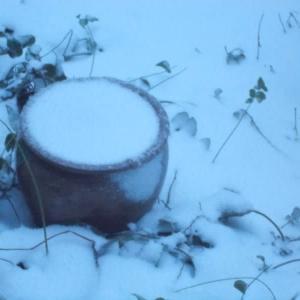 遅れて来た地吹雪