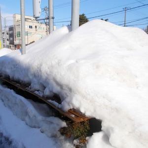 雪の下の力持ち