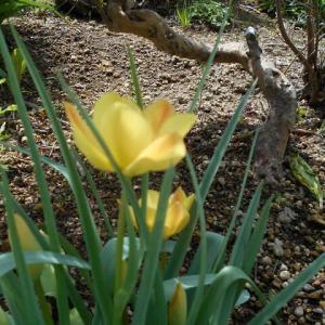 我が家の庭は 百花繚乱!とっても 賑やか……です