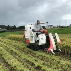 稲刈りが終了。