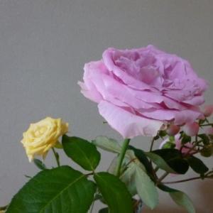 見切り品の花を買ってみた