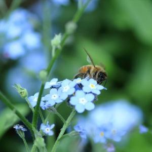 今日はミツバチを・・・