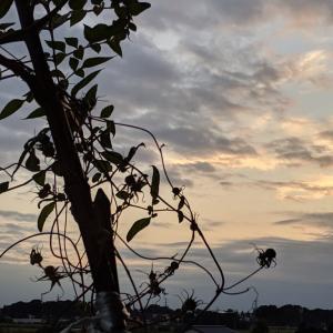 夕日を撮るつもりが…