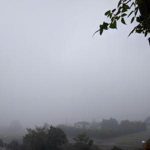 今朝は霧で外は真っ白でした