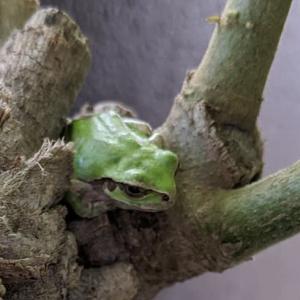 朝1番にベランダのカエルさんを探します😁