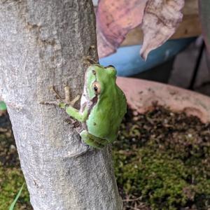 今日はカエルさん2匹と会えました〜😊