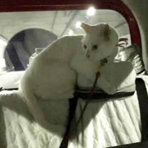 9月30日 車内での猫達