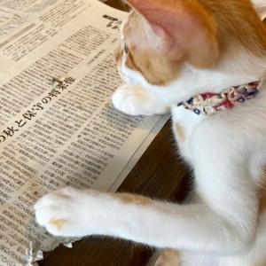 9月25日 紙を食う猫