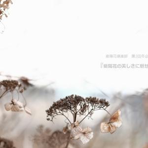 紫陽花倶楽部 第3回冬企画  『   紫陽花の美しさに魅せられて  』