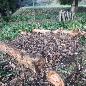 枯葉を溜めて腐葉土作り