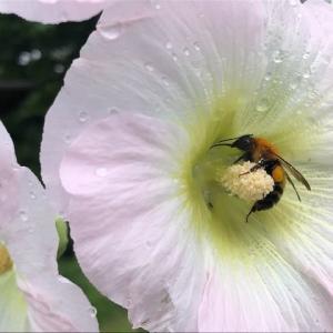 花蜂は数々おれど