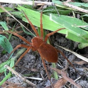 均整のとれた蜘蛛・・・その2